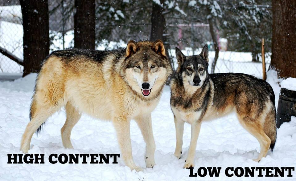 Wolf Vs Dog Size